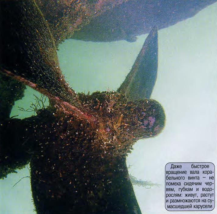 Корабельный винт в корковых водорослях